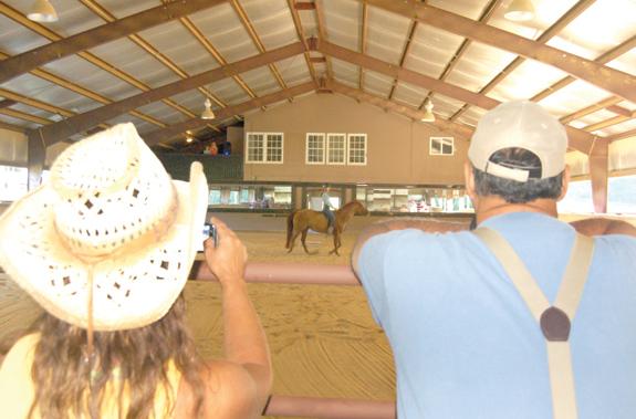 <i>Economic impact of horses is huge</i>